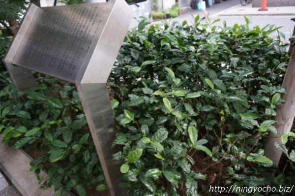 茶の木神社植え込みお茶の木画像